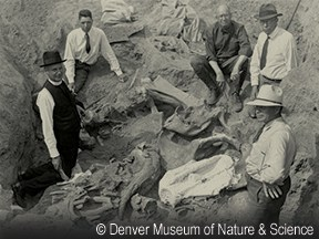 """Digging Deeper"" Exhibition @ Greleey History Museum 